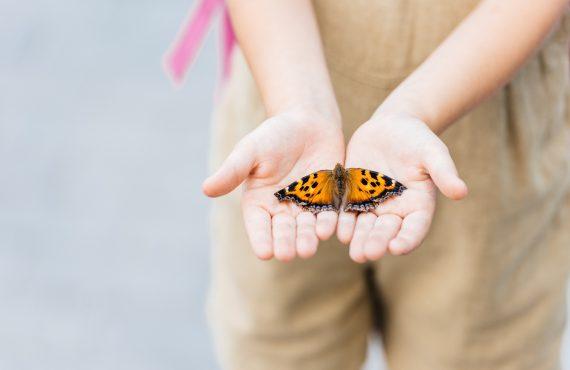 Hayata bir kelebeğin gözünden bakmak…