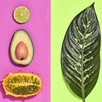 Vegan Diyeti Sağlığa Faydaları