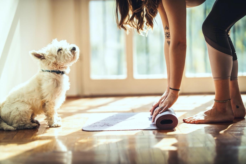yoga-kopek