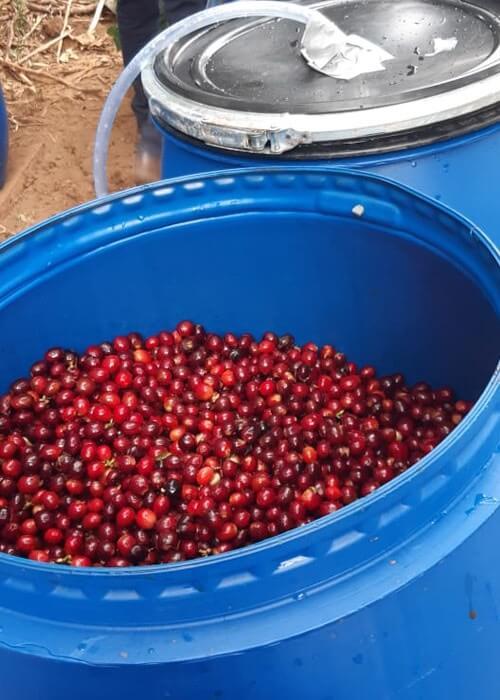 anaerobik-kahve-yapım-aşaması